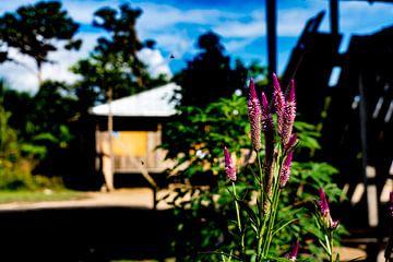 Schöne violette Blüten im Amazonas-Dorf in Peru, Südamerika. von John Ozguc