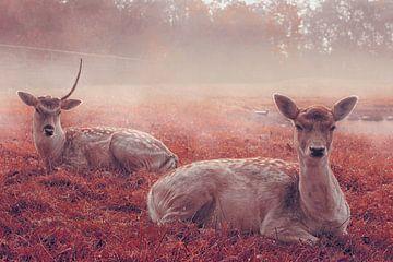 My deer von Elianne van Turennout