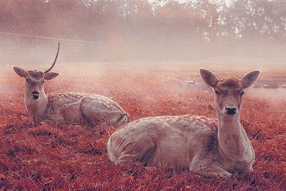 My deer van Elianne van Turennout