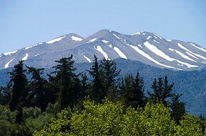 Bos, berg en sneeuw