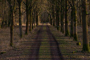Oostvaardersplassen Almere von Brian Morgan