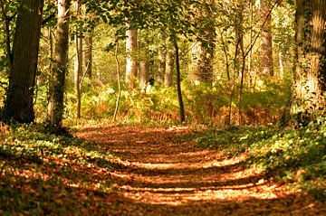 Herbst in Holland von Jaimy Buunk