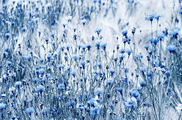 korenbloemen Fineart van Tanja Riedel