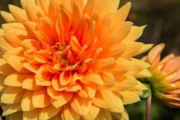Flower 5 sur Eugene Klinkenberg