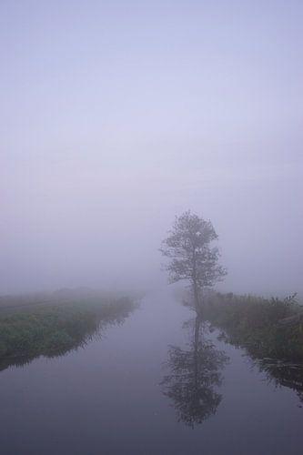 Simplicity van Hessel de Jong