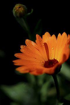Mamas Blume von Evelien Bruns