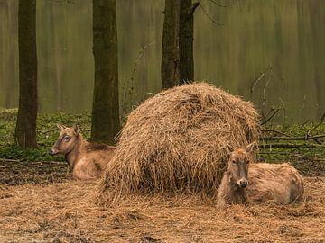 Stilleven met hooi en herten van Anneriek de Jong