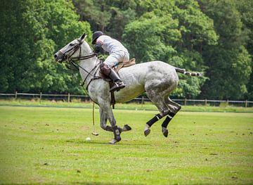 Polospieler auf seinem Grau von Hamperium Photography