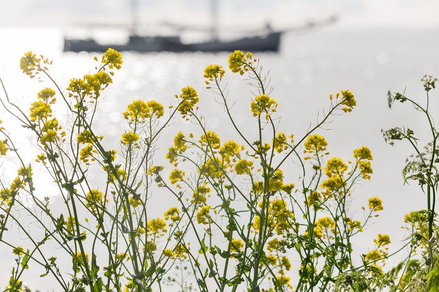 Zeilboot en koolzaad - IJsselmeer van Servan Ott