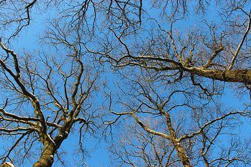 Hohe Bäume von Wilma Overwijn