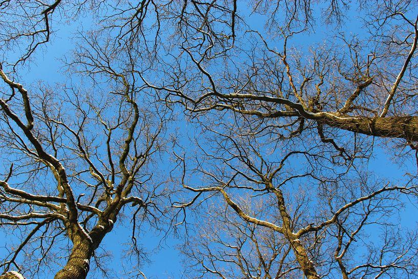 Hoge bomen van Wilma Overwijn