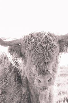 Schottischer Highlander in Brauntönen von Mascha Looije