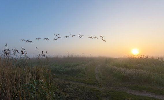 Overvliegende ganzen tijdens mistige ochtend van Remco Van Daalen
