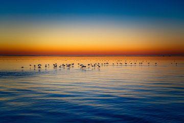 Silhouetten bij zonsondergang van Joris Pannemans - Loris Photography