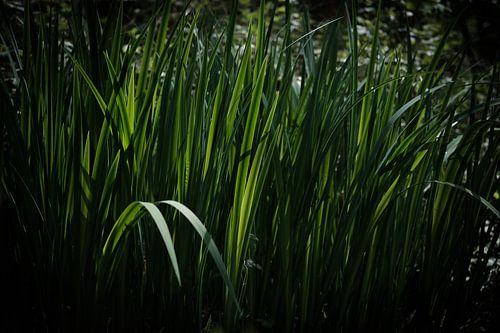 Watergroen
