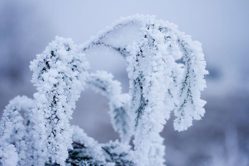 Winter in de natuur, plantes bedenkt onder een laagje sneeuw van Karijn   Fine art Natuur en Reis Fotografie