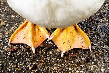 Mit beiden Füßen auf dem Boden von rene marcel originals