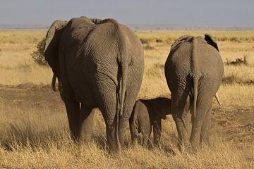 Olifanten groep met een jong lopend op de steppe in Kenia van Jeffrey Steenbergen