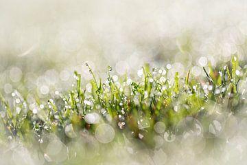 Dauwdruppels op het gras in de ochtend met een prachtig bokeh van KB Design & Photography