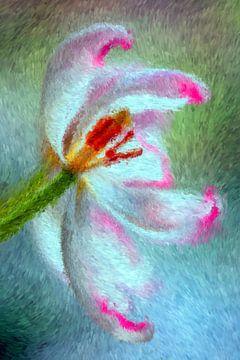 Tulpe van Augenblicke im Bild