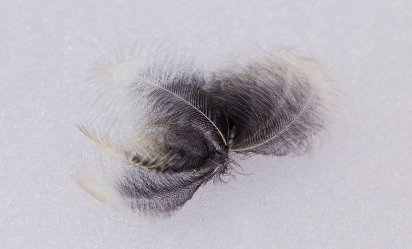 Feather in snow van Anne Koop