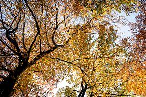 Herbstliche Farben im Wald. von mandy vd Weerd