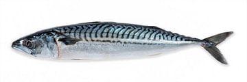 makreel vis van MadebyGreet