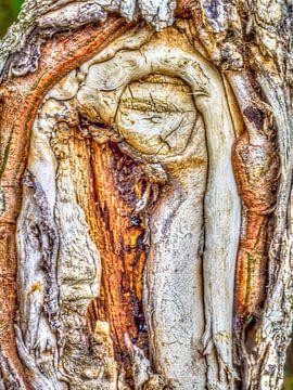 Oude boom van Ron van Ewijk