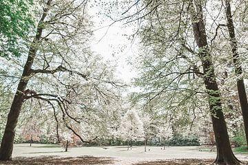 Engelwald in schönen Frühlingstönen von Jennifer Petterson