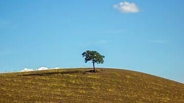 Baum in der Landschaft der Toskana, Italien von Discover Dutch Nature