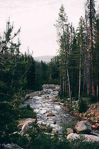 Beek in een bos van