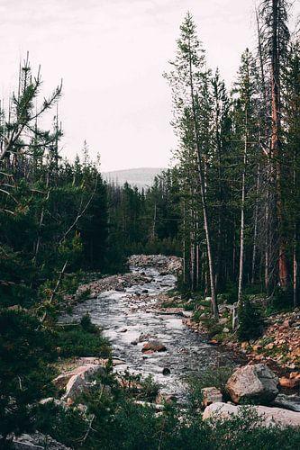 Beek in een bos