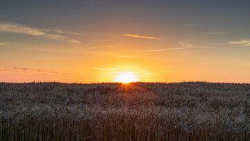 Zonsondergang boven het korenveld van Willemke de Bruin