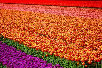 Regenbogenfarben von Anouschka Hendriks