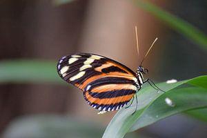 Macro beeld van een mooie kleurrijke vlinder