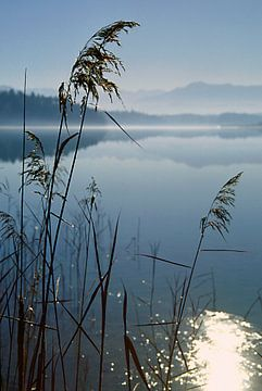 Seeufer - Osterseen - Bayern von Peter Bergmann