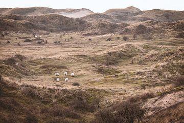 Die niederländische Dünenlandschaft von Sharon de Groot