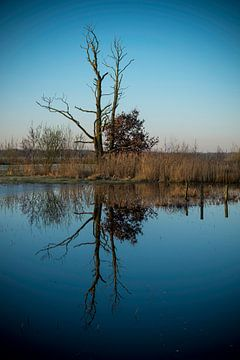Dead Tree van Gerard van der Wal