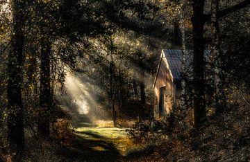 Huisje in het bos van Yori Hurkmans
