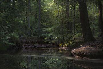 morgens im Wald von Dieter Beselt