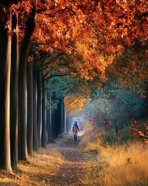 A walk in the forest van Niels Tichelaar