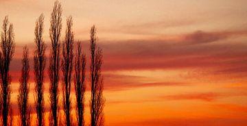 Bomen in het avondrood van Lisa-Valerie Gerritsen