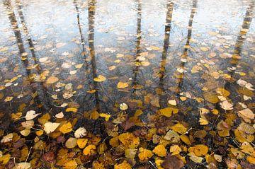 Herbst von Sonja Pixels