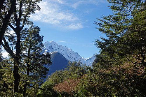 Regenwoud en besneeuwde bergtoppen op weg naar Milford in Nieuw Zeeland van