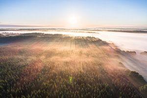 Drents bos tijdens zonsopkomst van dron inger