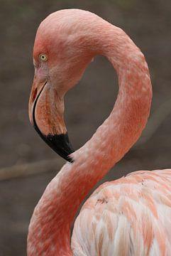 Flamingo von Diana Waardijk