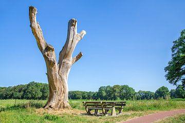 Toter Baum mit Bank in niederländischen Landschaft von Ben Schonewille