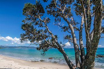 Côte solitaire près de Kuaotunu Bay, Nouvelle-Zélande sur Christian Müringer