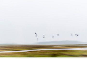 vogels over de moer van Petra Slingenberg