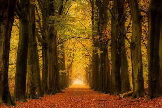 Herfst bos op een regenachtige dag, nog steeds prachtige kleuren  van Bram van Broekhoven
